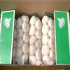 /product-detail/white-fresh-high-quality-garlic-for-sale-50038262740.html