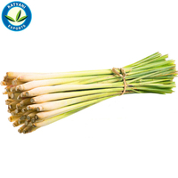 Lemon Grass Oil Fresh & Pure