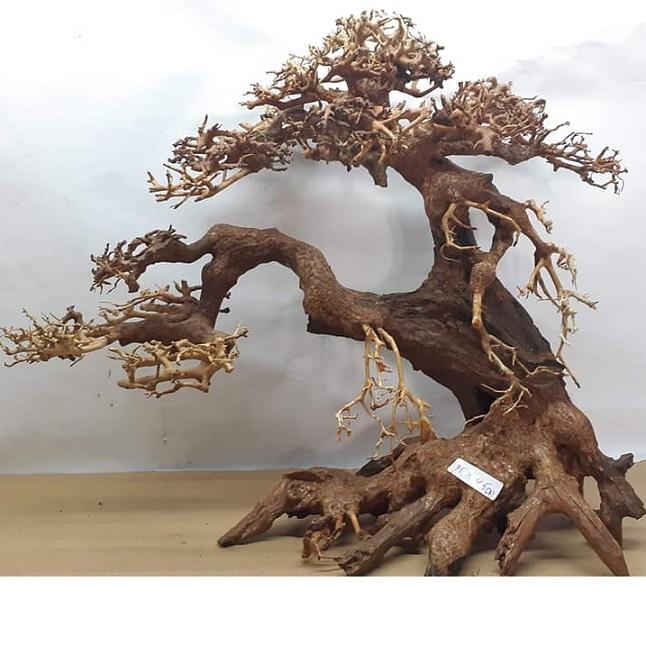 Superfish Bonsai Driftwood Tree Bonsai Tree