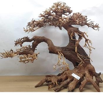 Aquascape Ideas Bonsai Tree Aquascape