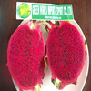 FRESH DRAGON FRUITS WITH PREMIUM QUALITY