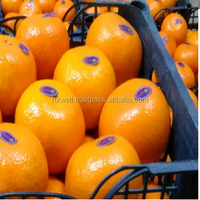 FRESH TANGERINE (Spanish morket) / CITRUS FRUITS FROM EGYPT