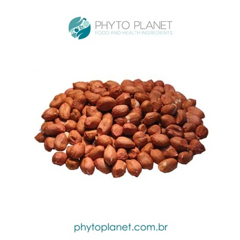 RAW PEANUTS 50/60 FROM BRAZIL