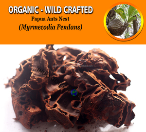 WHOLESALE Papua Ant Nest Myrmecodia Pendans Organic Wild Crafted Fresh Natural Herbs