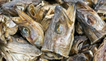 Image result for stockfish