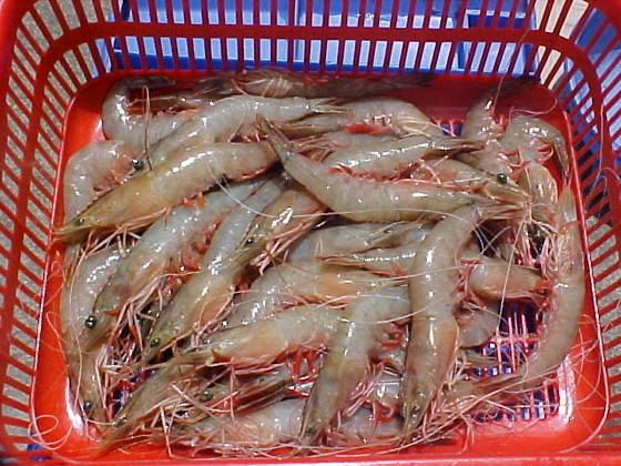 Frozen Raw Shrimp Frozen Jumbo Shrimp Frozen Seafood Buy