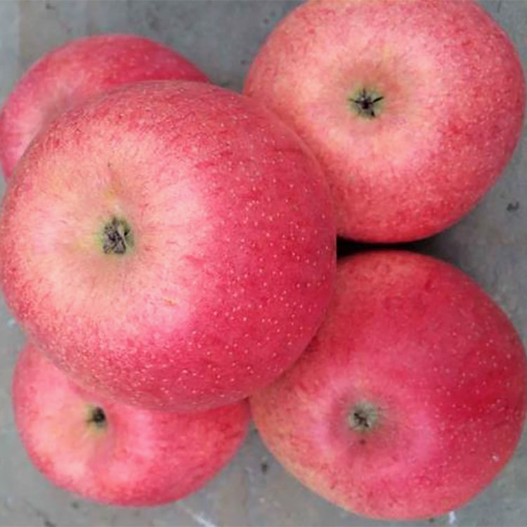 Wholesale Prices Export Fresh Red Delicious Apple Fruit