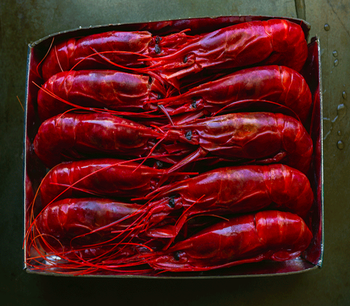 Carabineros Jumbo Prawns Bulk. Best Offer 2019!