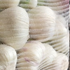 /product-detail/factory-supply-high-quality-fresh-natural-garlic-price-for-sale--50037515594.html
