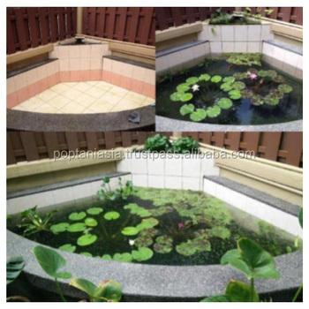 Aquaponic Fish Pondscaping Plastic Garden Ecosystem Design