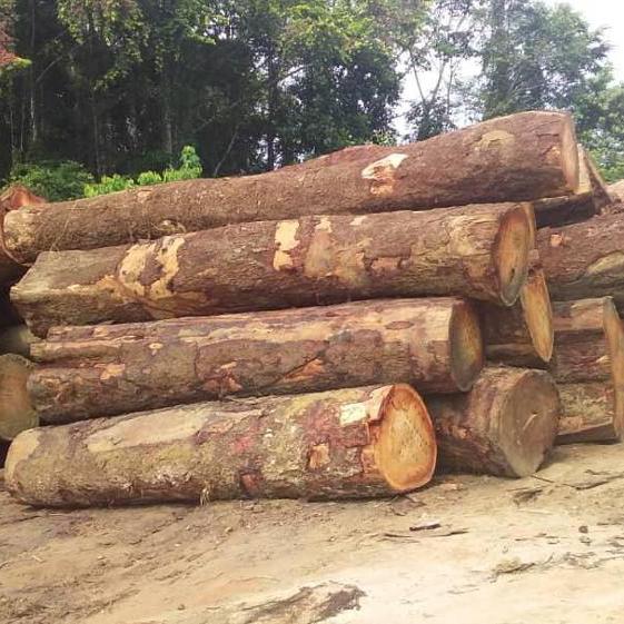 Teak Wood And Tali Wood Logs Buy Teak Wood Logs Burma Sudan Teak Logs Gabon Tali Square Product On Alibaba Com
