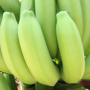 Hot Sales ! Fresh Green Dole plantain and banana