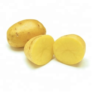 Fresh Holland potato harvest wholesale price per ton exported to Dubai