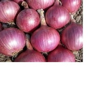 Grade AAA lowest price fresh red onion