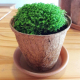 Round and square Coconut plant coir fibre pot/pots