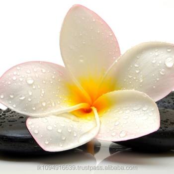 Pure Fresh Natural Aromatic Frangipani Floral Extract - Buy Plumeria  Extract,Honey Extract,Citrus Extract Product on Alibaba com