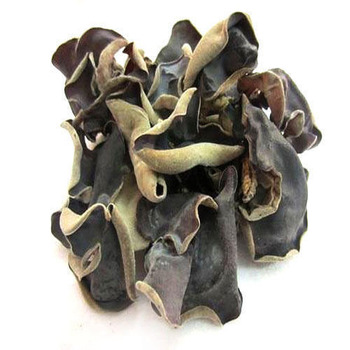 Dried Black Fungus Mushroom / Dried Black Ear Mushroom With High ...