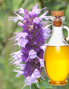100% Pure Plants Extracts Hyssop Essential Oil OEM/ODM Professional Supplier