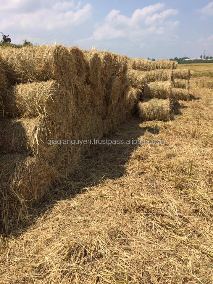 Best Rice straw/Hay for animal