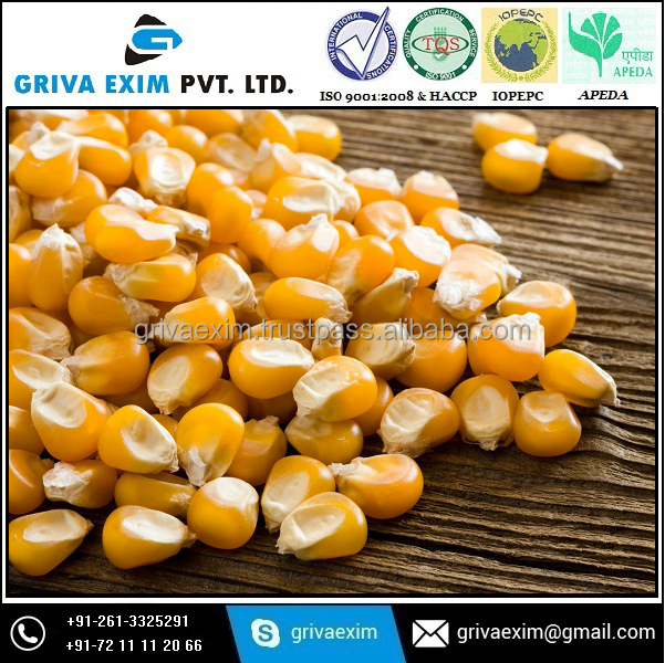 Yellow Corn Suppliers