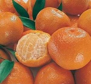 Sweet Fresh Mandarin Naval Orange for sale