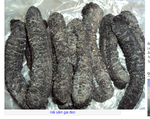 DRIED SEA CUCUMBER/ WHITE TEAT FISH VIETNAM