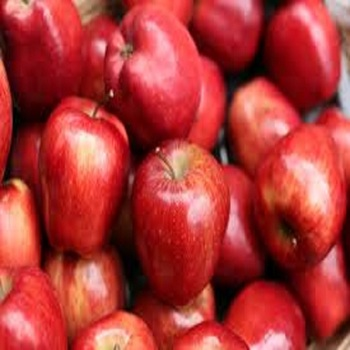 Rose Apple Bell Fruit