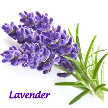 Pure <span class=keywords><strong>Lavendel</strong></span>/Essentie Olie