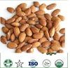 Fresh processed Almond Nuts
