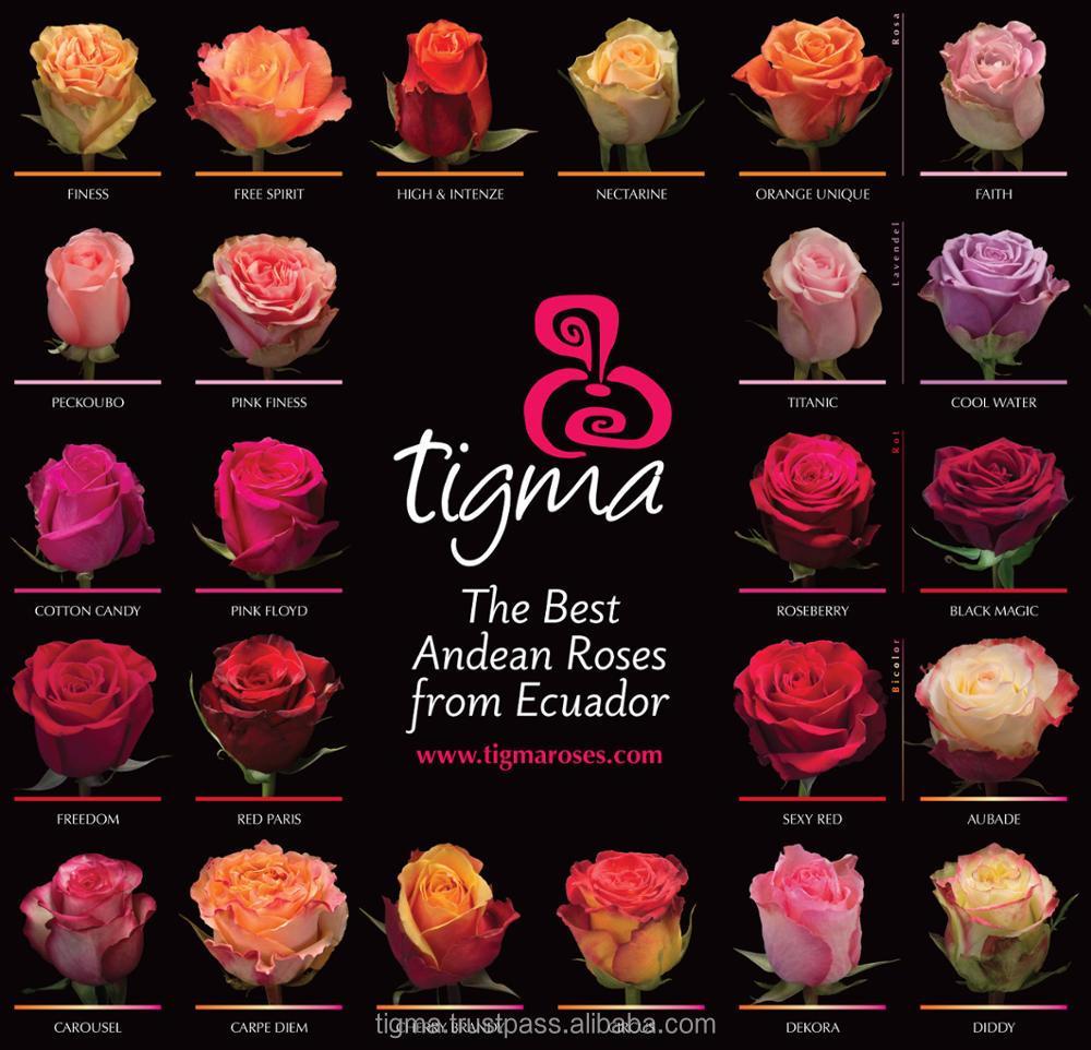 этих сорта роз с фото и названиями эквадор выполняется разметка стенах