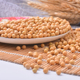 Canada Wholesale Dried Yellow Soybean / Soya Seeds