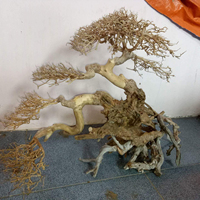 BONSAI DRIFTWOOD from VIETNAM with AMAZING PRICE- contact me 00 9123 944 77