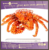 boiled and frozen short-leg king crab Hanasaki by RED FISH Russian King Krab by Red fish Co, Ltd