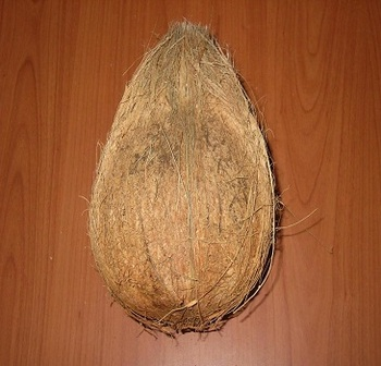 Fresh Coconut Mature From Tamil Nadu At Reasonable Price