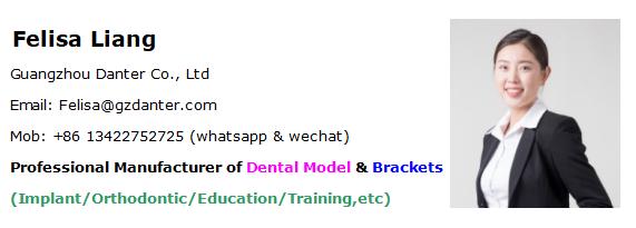 Novo projeto de substituição prática dentes Nissin dental dentes modelo para a prática de