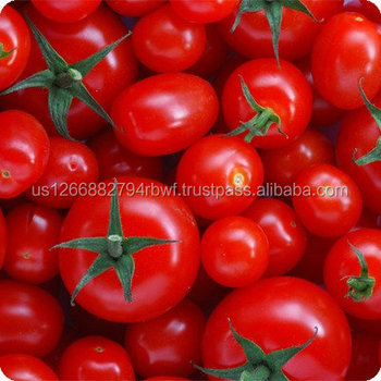 Hot selling high quality fresh tomato in USA