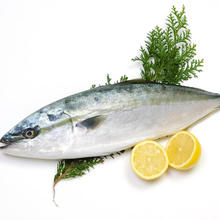 Yellowtail <span class=keywords><strong>जमे</strong></span> <span class=keywords><strong>हुए</strong></span> <span class=keywords><strong>मछली</strong></span>