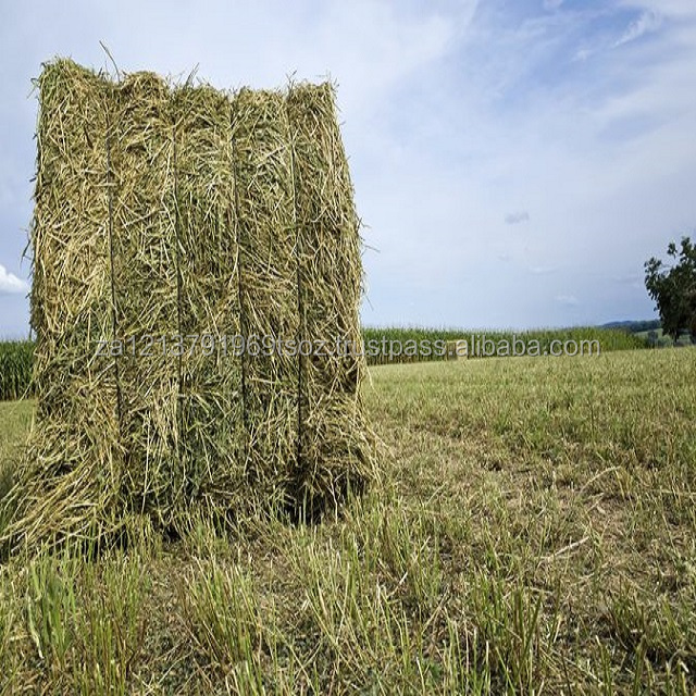 Buy high quality alfalfa hay, alfalfa hay