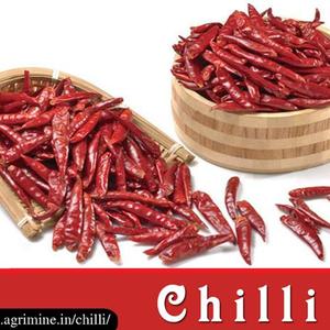 Teja Chilli Exporters