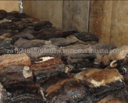 Cheap Price Top Quality Donkey Hide/Dry and Wet Salted Donkey /Grade A Wet Salted Donkey Hides For Leather
