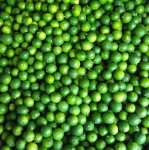 Fresh green seedless lime, good quality with good price from best supplier