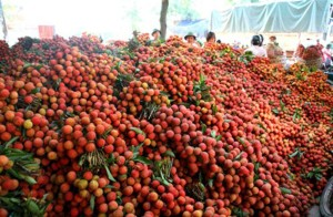 Lychees Vietnam Wholesale, Vietnam Suppliers - Alibaba