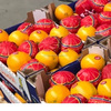 Export and Import citrus fresh fruit from Egypt