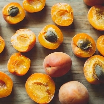 Best Quality Dried Apricot