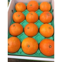 Japan Hot Selling 100% Natural Orange Fresh Fruit with Best Price