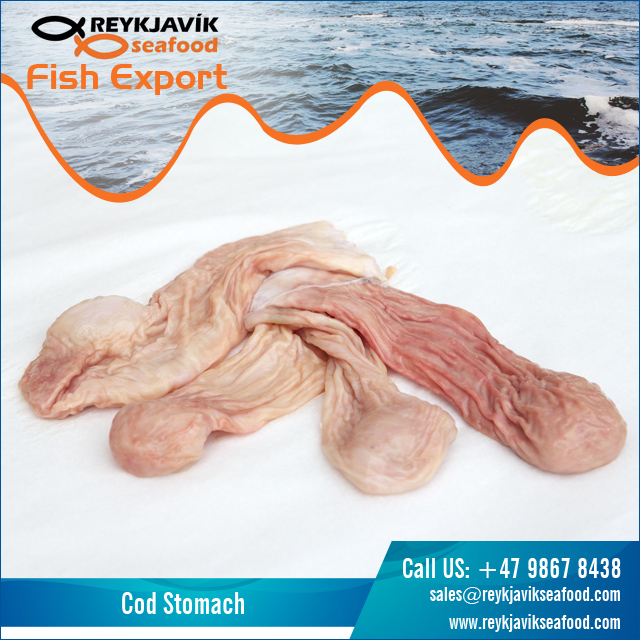 Widely Selling Cod Fish Stomach at Best Price