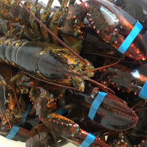 Price For Crayfish, Wholesale & Suppliers - Alibaba