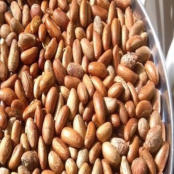 Bitter Kola Nut,African Bitter Cola(kolanut),Garcinia Kolanuts 400g(0 9lb)  - Buy Fresh Kola Nut Product on Alibaba com