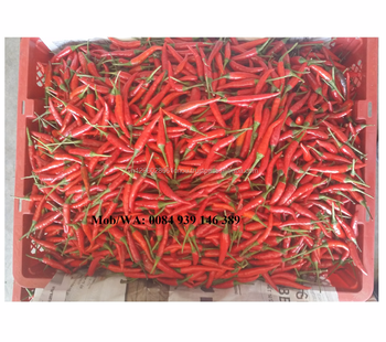VIET NAM FRESH CHILLI 3CM - 7CM - HIGH QUALITY - GOOD PRICE - hoang @vilaconic.vn