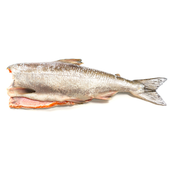 Sea Food Frozen Chum Salmon